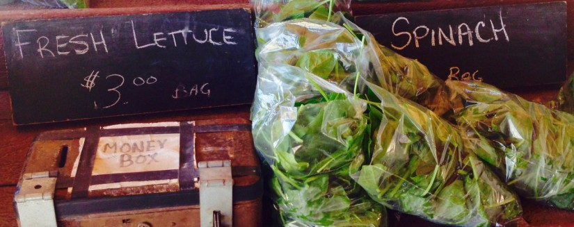 cropped-cropped-picton-vegetable-stand.jpg